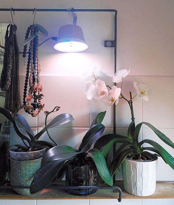 come-curare-le-orchidee-in-casa-luce
