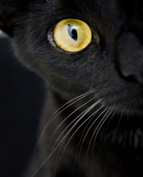 This is exactly what you see when you wake up in the middle of the night with your awesome black cat staring at you!