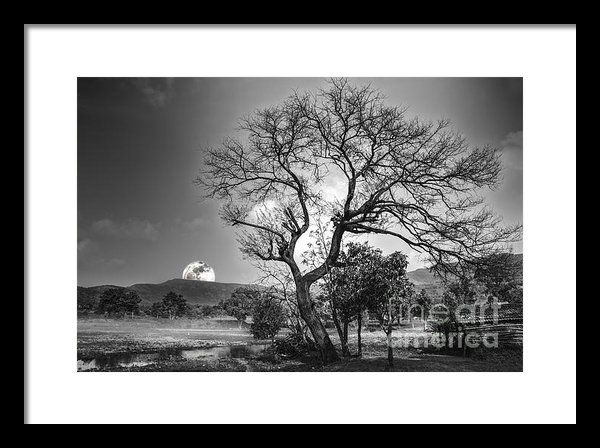 Tree Framed Print By Charuhas Images