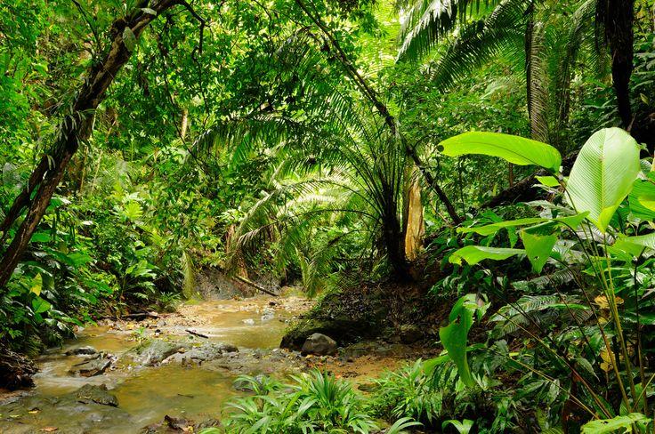 « On peut voyager non pour se fuir, chose impossible, mais pour se trouver. »  — Jean Grenier Connaissez-vous la crise du quart de vie ? Avec Poutine pour emporter, j'ai revisité la mienne sous un regard masculin, dans un contexte de fuite en Colombie. Peut-être lire le roman vous donnera envie d'aller vous perdre (trouver) dans la Ciudad Perdida (jungle colombienne) ?