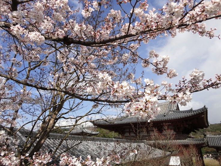 One Day I D Like To See A White Cherry Blossom Tree In Japan Sephoracolorwash Cherry Blossom Japan White Cherry Blossom Cherry Blossom