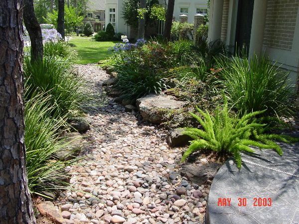 Swell walkway dry rock bed lined with asparagus fern for Rock garden designs