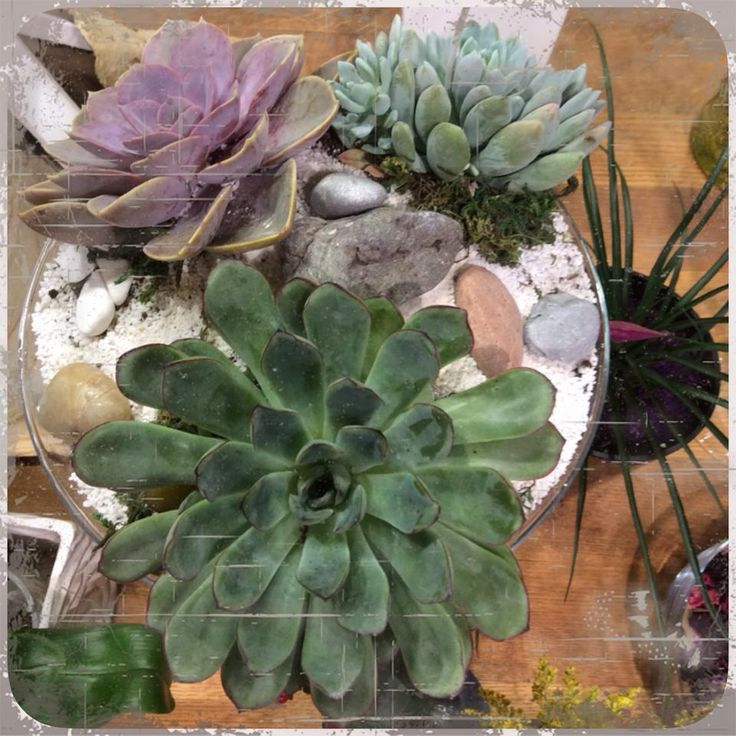 #succulent synthesis #floral belanidia by Avgi Metaxa