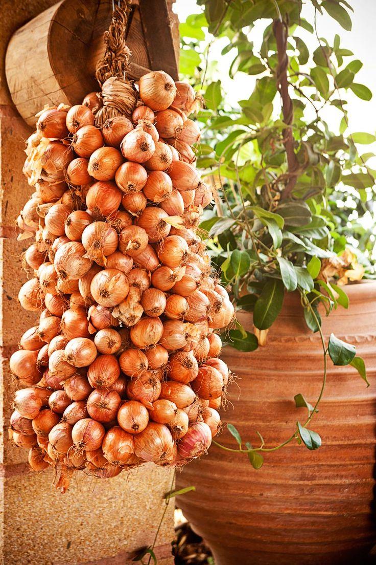 Greek Onions in the Garden