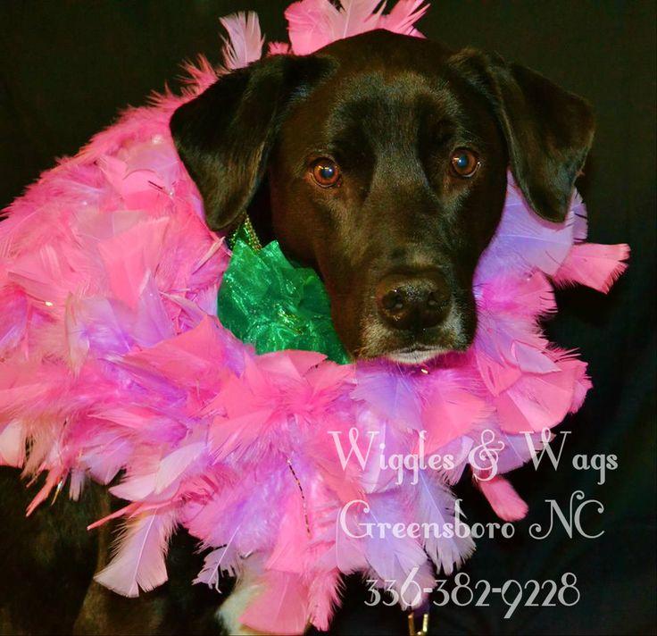Wiggles & Wags Greensboro NC 3363829228 Wiggles and