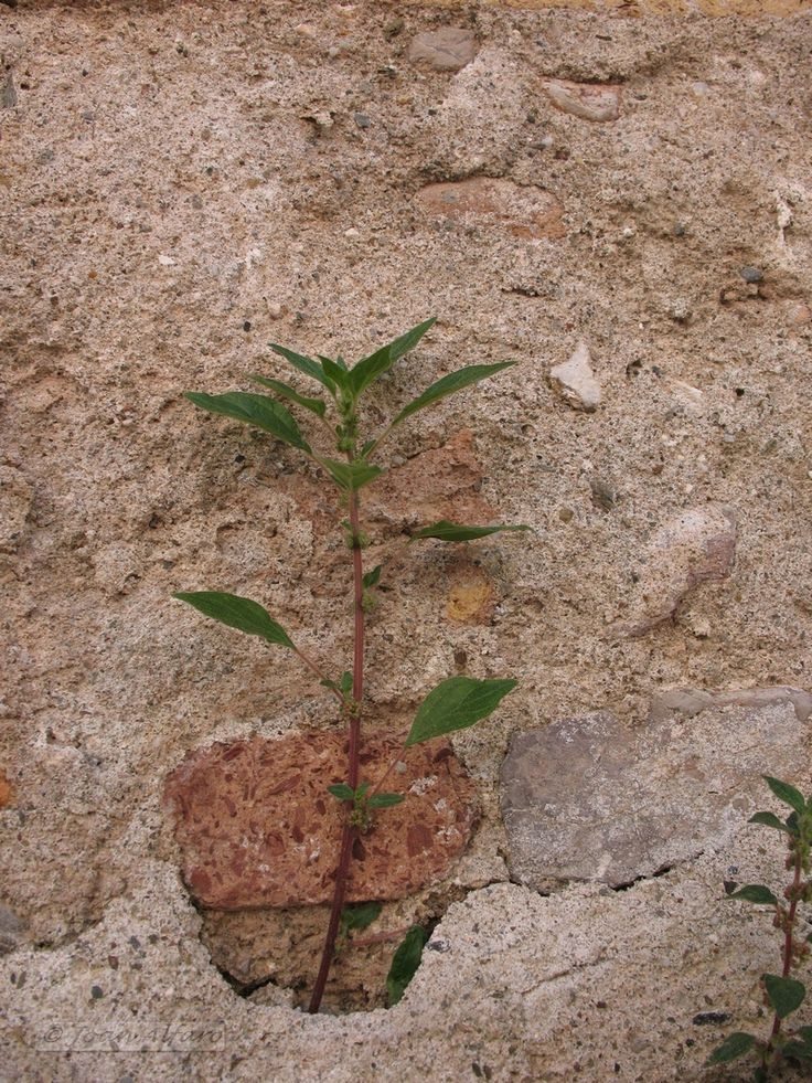 Simplicidad!!! La foto es sencilla, sin más pretensiones que mostrar una simple hierba en una pared cualquiera.