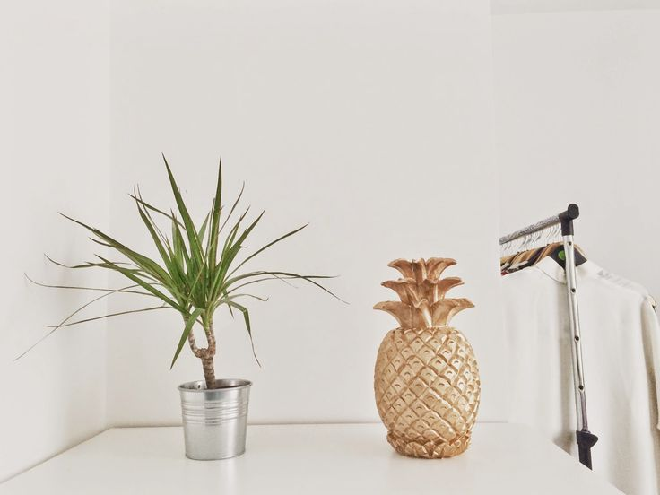 Home Snaps- Pineapple and plants