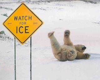 Watch for Ice.Signs, Laugh, Polar Bears, Ice, Funny Stuff, Humor, Funny Animal, Funnystuff, Watches