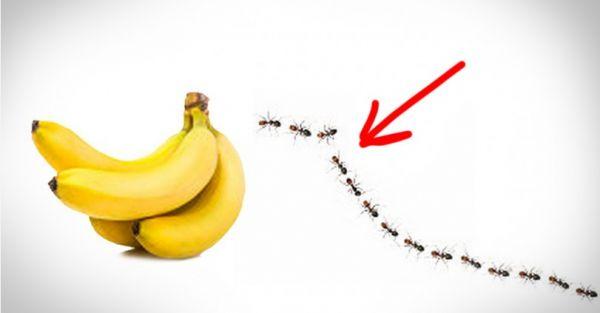 Λειτουργεί 100%! Ξεφορτωθείτε τα μυρμήγκια με αυτά τα τέσσερα υλικά!