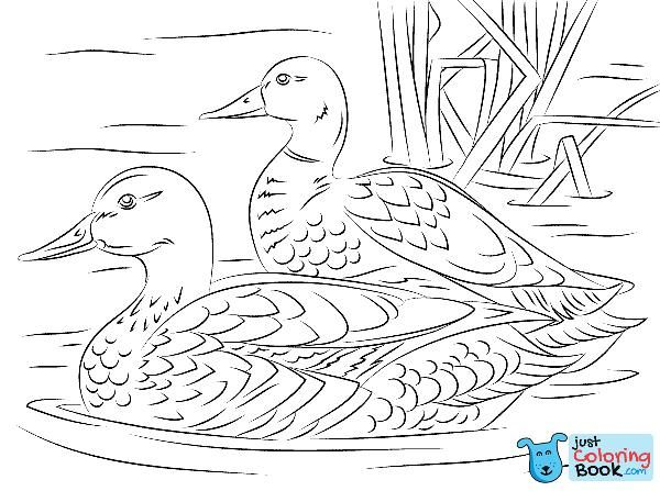 Pair Of Mallard Ducks Coloring Page Free Printable Coloring Pages Within Two Mallard Ducks Coloring Pa Bird Coloring Pages Bird Drawings Animal Coloring Pages