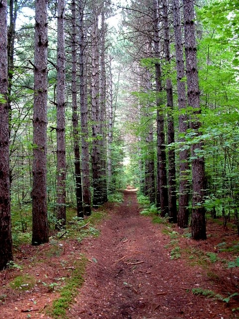 Nice shot of woods along the Prescott Russell Trail