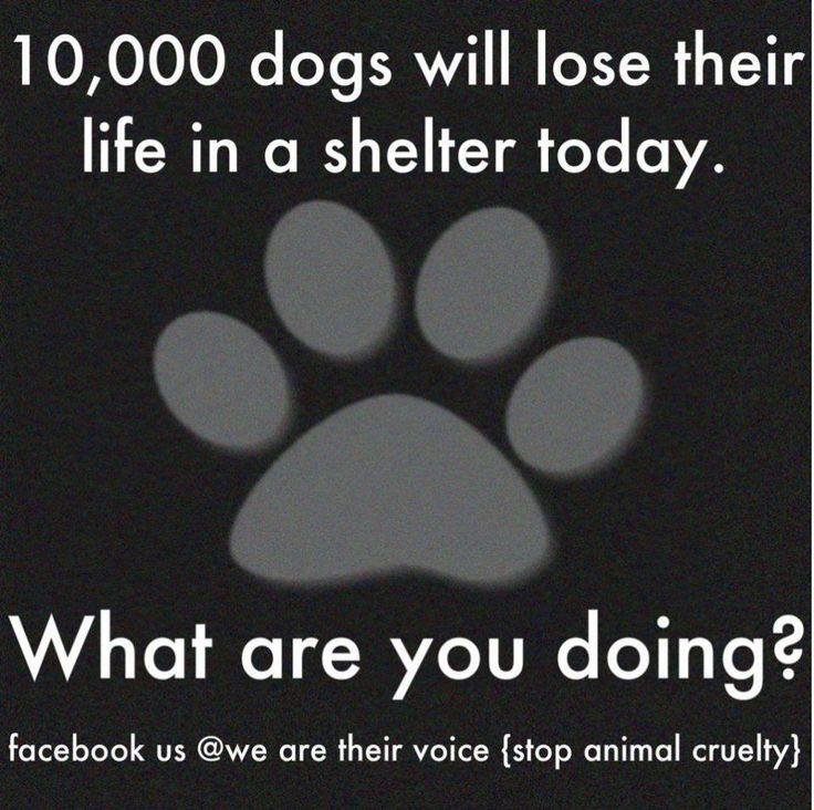 Save a life...ADOPT a shelter dog