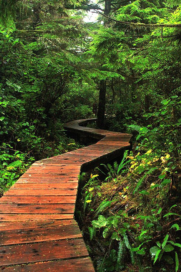 Pacific Rim Park trails | Nuu Chah Nulth Trail in Pacific Rim National Park | Tofino Trails