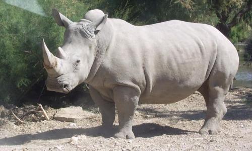 Animaux - Signez la pétition : Rhinocéros tué dans les Yvelines ! Stoppons le braconnage !