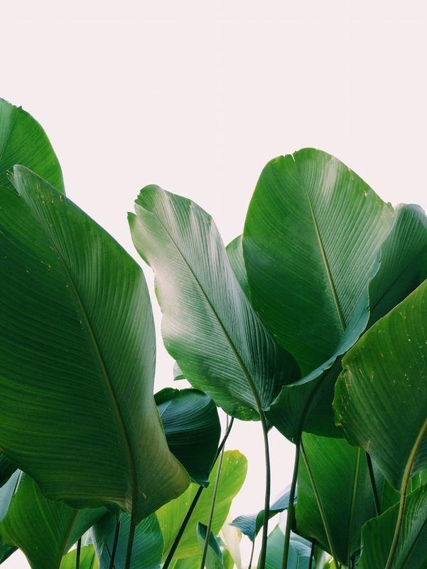 tropical  | yufoolsaround | VSCO Grid®