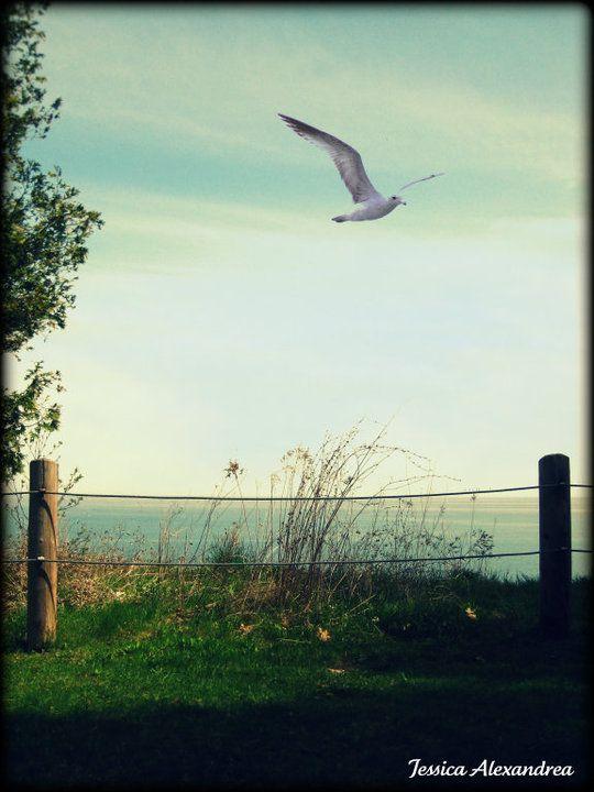 Free Flight