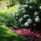 Shadedgarden3_flowers.about.com