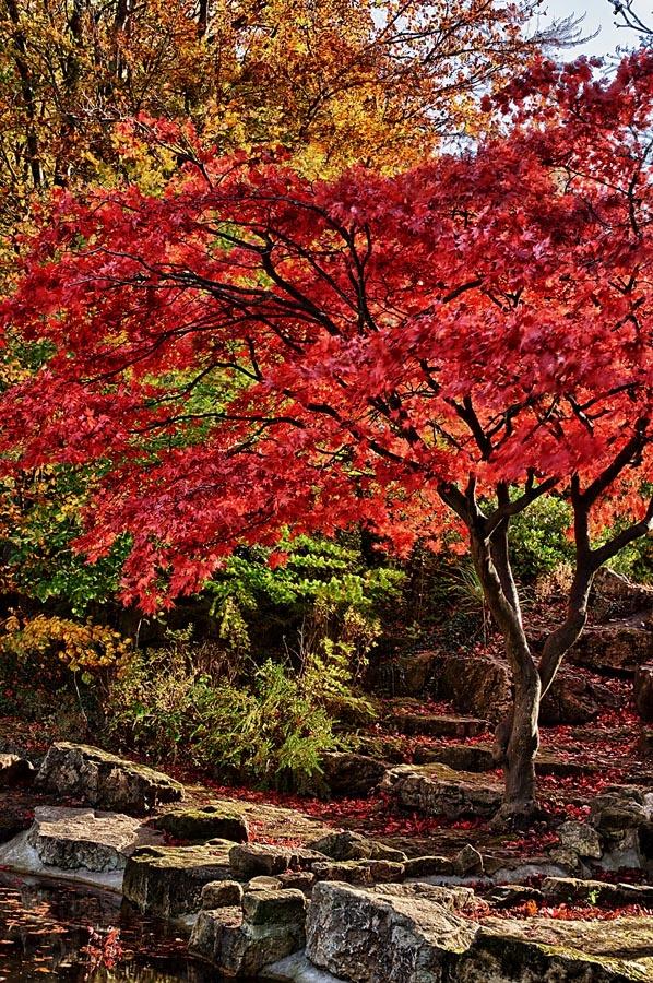 Memorial Gardens Clifton Park #Rotherham