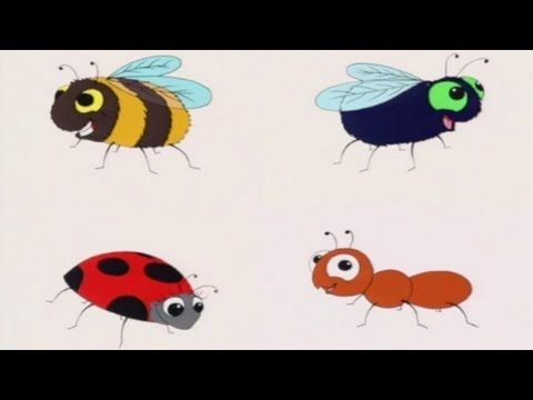 What is an Insect? recommended by Charlotte's clips http://pinterest.com/kindkids/sensual-science-charlotte-s-clips/