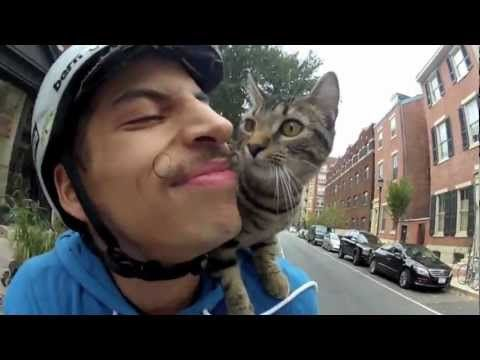 25-year-old Philadelphia bicycle courier Rudi Saldia started taking his kitten, MJ, along with him on his deliveries, propping the cat on his shoulders as he navigates the busy streets of Center City. He recorded the journeys and reactions from those that witness the unusual sight.