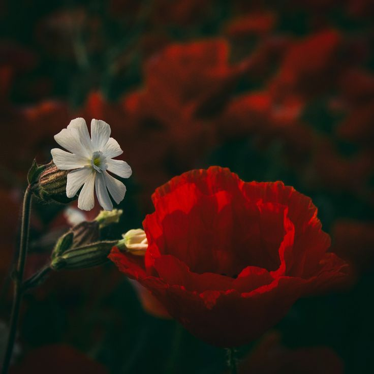 Wildflowers - Wildflowers