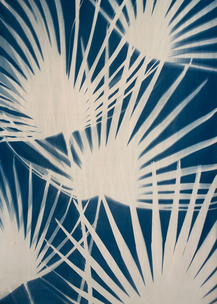 Palms Cyanotype on Paper  Erica Bartholomae