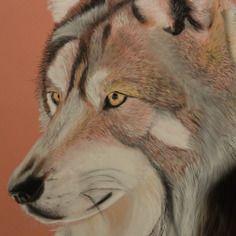 """""""un regard de loup"""" pastel format 30x40cm"""