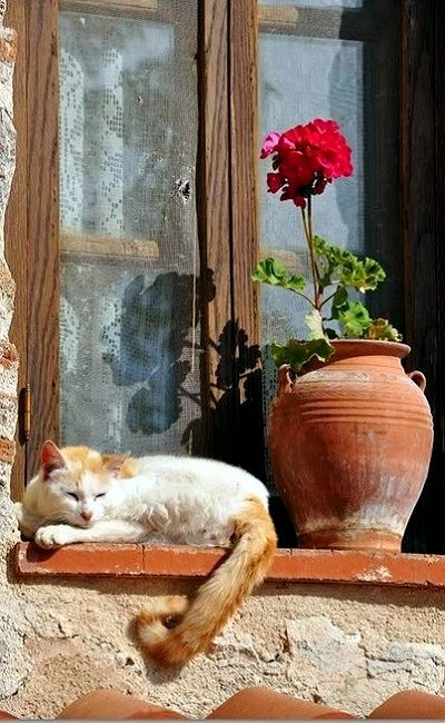 Great idea for a window painting - cat + vase with single flower