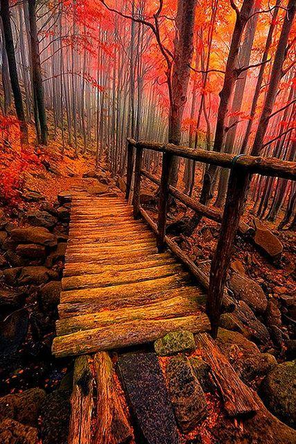 Path | 道路 | Chemin | путь | Sentiero | Camino | Dōro | Forest Bridge, Italy