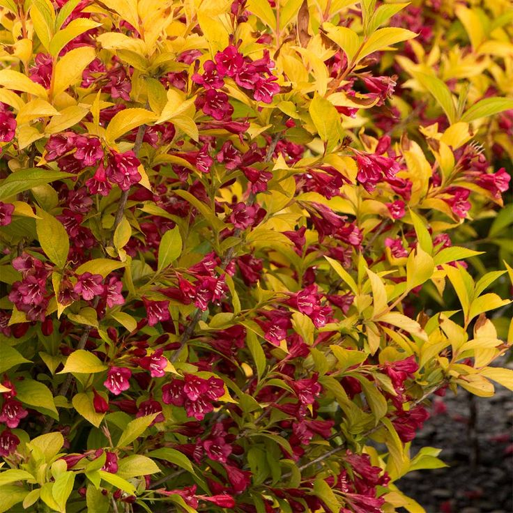 Advances in plant breeding have resulted in some outstanding woody plants worthy of a choice spot in your garden. Here are some to consider.