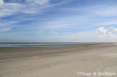 Ameland - Urlaub mit Hund - Reisen mit Hund - Niederlande - Holland  - Strand - Insel - Unterwegs mit Hund - Hundeblog - Hundeblogger - Dogblog - Dogblogger - dogsundbuddies.com