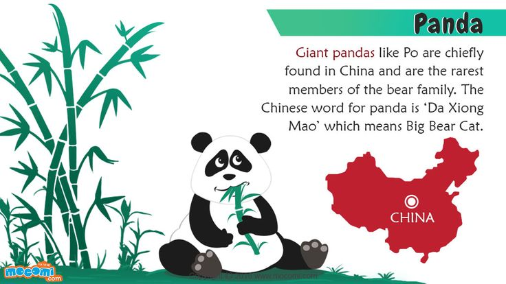 "Giant Panda Facts and Information - In China, a giant panda is known as ""da xiong mao"", which means big bear cat. For more #GK articles for kids, visit: http://mocomi.com/learn/general-knowledge/"