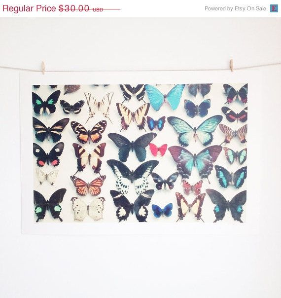 SALE CLEARANCE SALE Wings  Nature Photography Still by CassiaBeck, $25.50