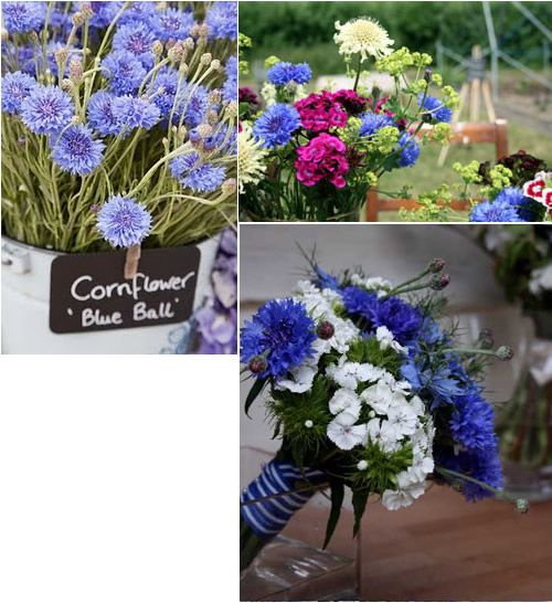 Cornflower Wedding Bouquets and Decorations