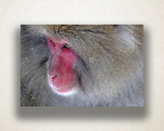 creating canvas art. Baboon Close Up Print Artistic Wildlife Wall Art We pride ourselves in  creating the highest quality canvas prints due to our state of 117 best Canvas images on Pinterest Photo