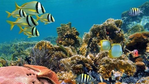 Scuba diving - Life under water is beautiful!  Explore life! #KILROY #Indonesia #corals #fish