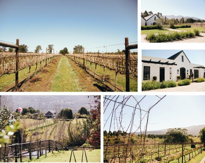 Plettenberg Bay wine farms to visit! #winefarms #southafrica #whattodoinsouthafrica #explore #plett #knysna