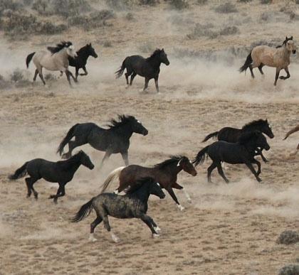 Wild horses with no boundaries.