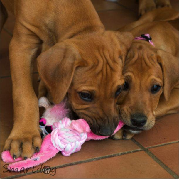 Rogz Pupz Cowboyz Reb - Pink