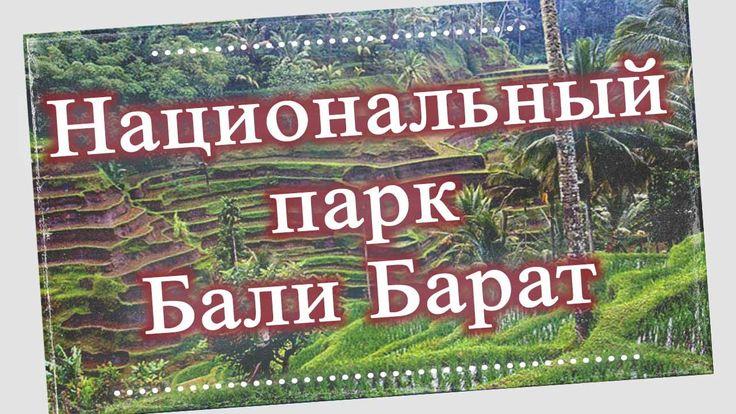 В 1917г. в северо – западной части острова Бали был обнаружен природный заповедник Бали – Барат, который в настоящее время носит название национального парка...