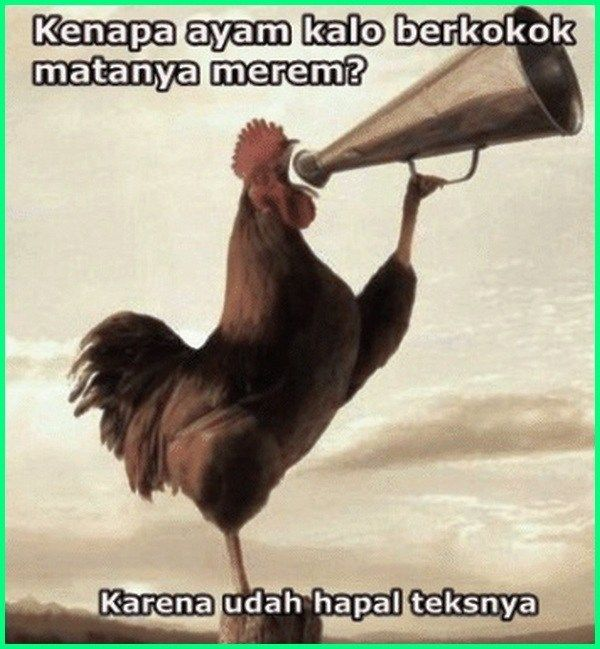 12 Meme Ayam Paling Gokil Dan Kocak Yang Bikin Ngakak Lucu