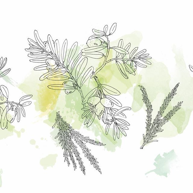 #VSCOcam #pen #picture #illust #illustagram #illustration #line #japan #creative #イラスト #アート #絵 #日本 #graphic #design #magazine #グラフィック #sketchaday #ink #デザイン #東京 #雑誌 #手描き #植物 #オリーブ #イラストレーション #水彩 #ローズマリー #olive #rosemary