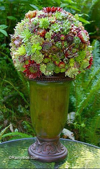 How did they do that?  Great sedum ball design.  Pot compliments the sedums color.