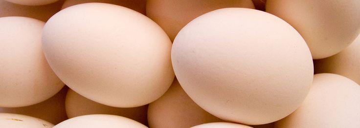 tojás bevezetése