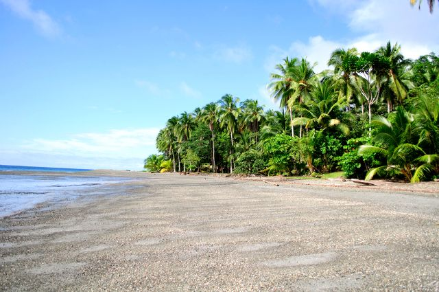 Isla Gorgona - Colombia. Forest and beach, heck yeah !