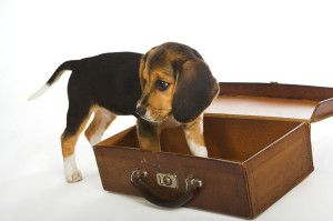 Sharing Saturdays - About Pet Friendly Motels And Pet Hotels