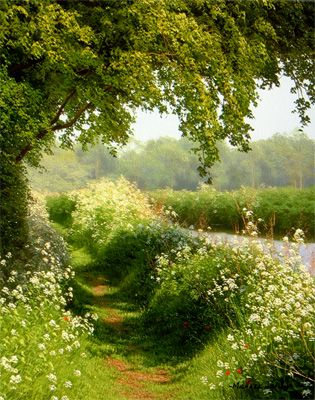 The Smith Gallery - British Landscape Artists - David Smith & Michael James Smith - Chelmer Flowers: