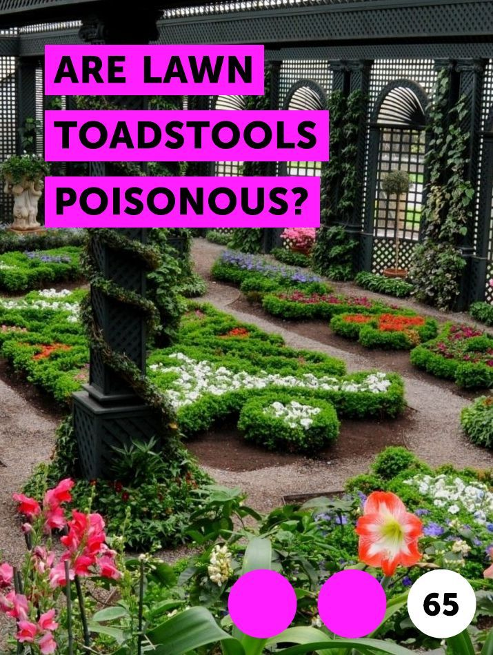 707c3f3e11fcd315dde590551214526b - How To Get Rid Of Toadstools In Your Lawn