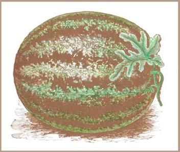 The 5,000-Year Secret History of the Watermelon