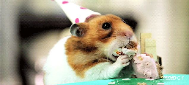 Tiny hamsters birthday party
